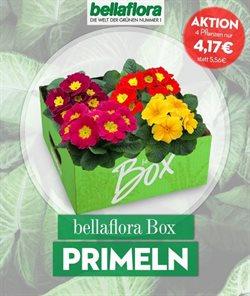 Bellaflora Katalog in Innsbruck ( Abgelaufen )