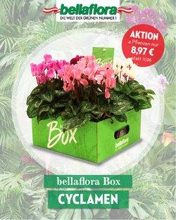 Angebote von Bellaflora im Bellaflora Prospekt ( 8 Tage übrig)