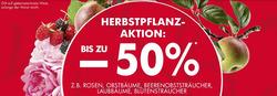 Angebote von Bellaflora im Wien Prospekt