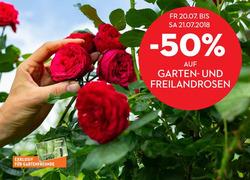Angebote von Bellaflora im Graz Prospekt