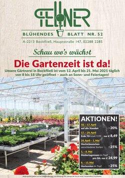 Angebote von Blumen Fellner im Blumen Fellner Prospekt ( Abgelaufen)