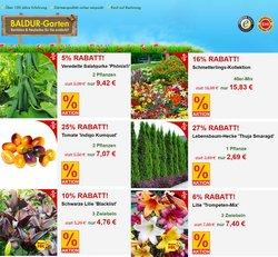 Baldur Garten Katalog ( Gestern veröffentlicht )