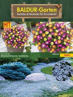 Angebote von Baldur Garten im Baldur Garten Prospekt ( Gestern veröffentlicht)