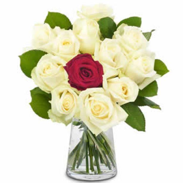Einzigartige Rosen für 67,99€
